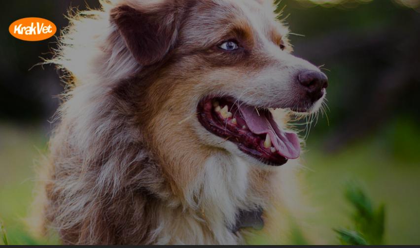 Konkurs dla właściciela psa, konkurs fotograficzny